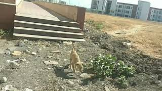 Puppy follows me in the campus of School of Planning and Architecture, Bhopal