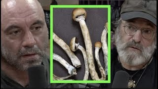 The Benefits of Micro-dosing Mushrooms w/Paul Stamets | Joe Rogan
