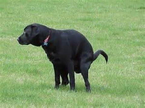 The DNA dog poop debate