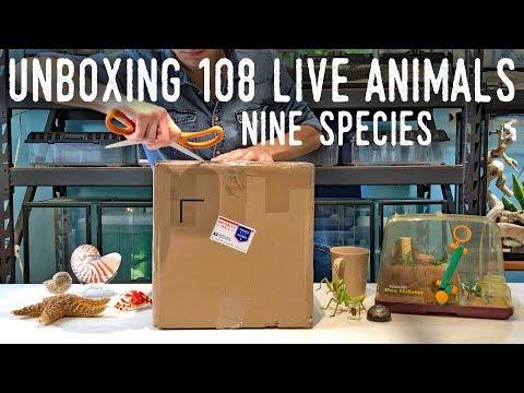 MASSIVE ANIMAL UNBOXING - 9 Species, 108 Invertebrates!