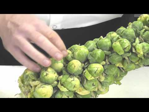 Working with Brussels Sprouts - on and off the stalk by Peter Roberson, RP's Pasta