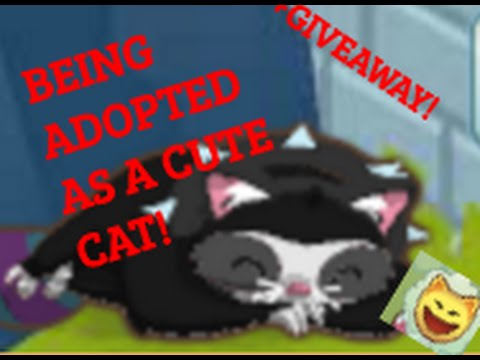 BEING A CAT AND GETTING ADOPTED ON ANIMAL JAM!!!!