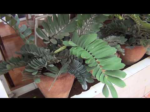How to make your house look beautiful with plants around you
