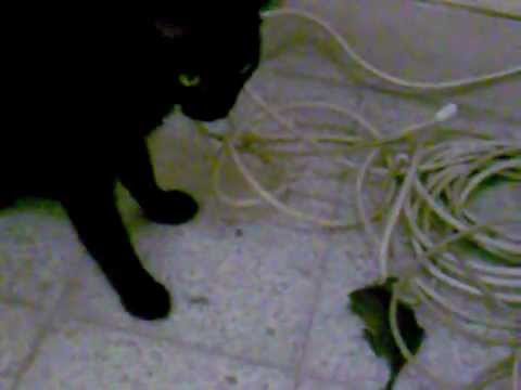 Kiki caught a mouse, was not injured.