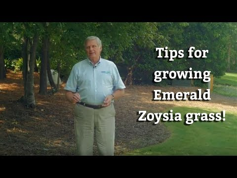 Growing Emerald Zoysia Grass - Warm Season Turf Tips