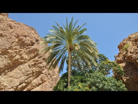 Oman - Wadi Bani Khalid & Wadi Shab