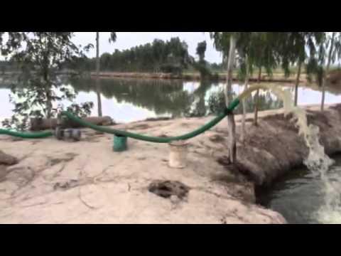 Fish farming in punjab