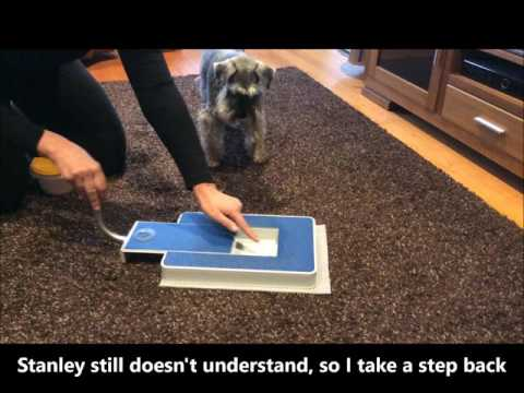 Dog Nail Clipping - an easy and no stress alternative.