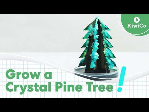 Grow a Crystal Tree DIY