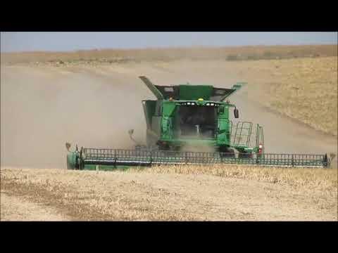 Dry Bean (Pinto) Harvest 2017