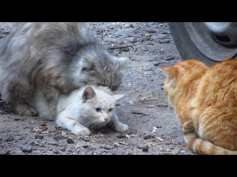 Xxx Mp4 Cats Mating Group Cats Mating On The Street 3gp Sex
