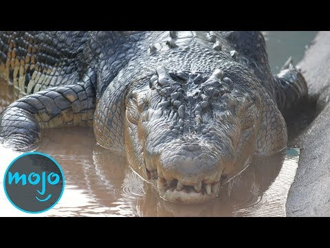Top 10 Largest Reptiles