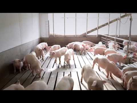 A Field Trip to Ohio Pig Farms and Farm Song