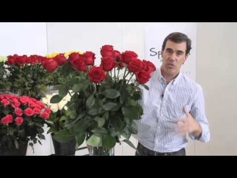 How to arrange your roses and make them last!