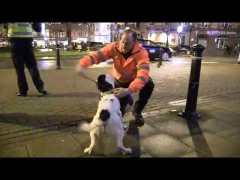 Drug detection dog being used in Harrogate