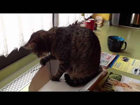 The Easiest Way To Keep Your Cat Entertained.mov