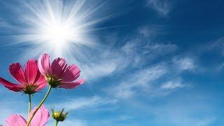 "Peaceful Music, Relaxing Music, Instrumental Music ""Rose Petal Park"" by Tim Janis"