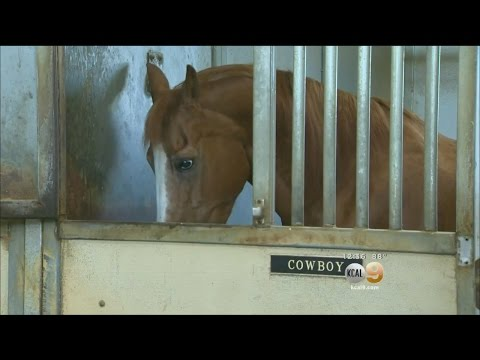 LAPD Horse To Retire After 18 Years Of Service