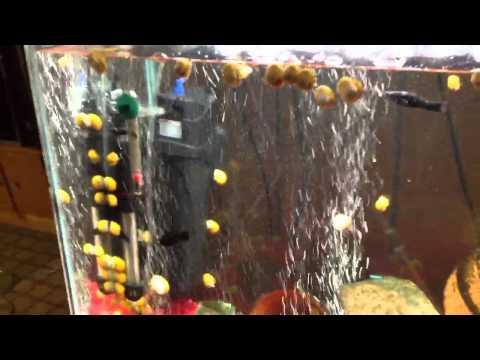 Secret to Clear Aquarium Water