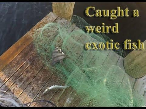 Cast net fishing caught a weird exotic fish