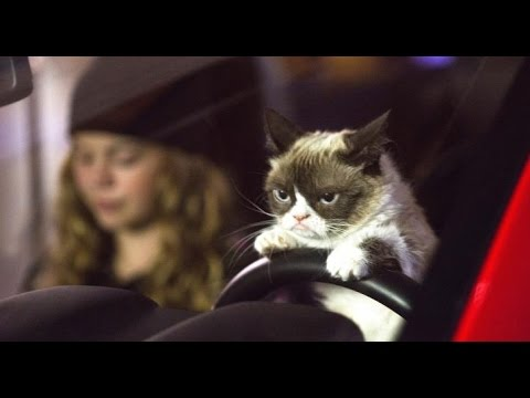 WORST GRUMPY CAT EVER !!
