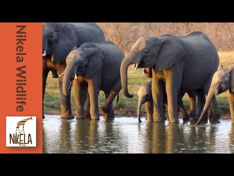 3 Things To Know About Saving Wildlife