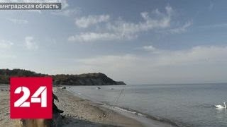 Санитары бизнеса. Специальный репортаж Артема Ямщикова - Россия 24