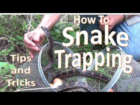 How to Trap Snakes using Minnow Traps (Dos, don'ts, and tips)