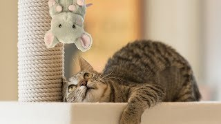 Funny Cats Scared of Stuffed Animals Compilation Funny Cat Compilations
