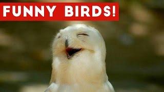 Funny Parrot & Bird Videos Weekly Compilation November 2016 | Funny Pet Videos