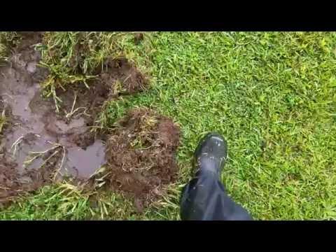 Feral Pig Damage and Repair
