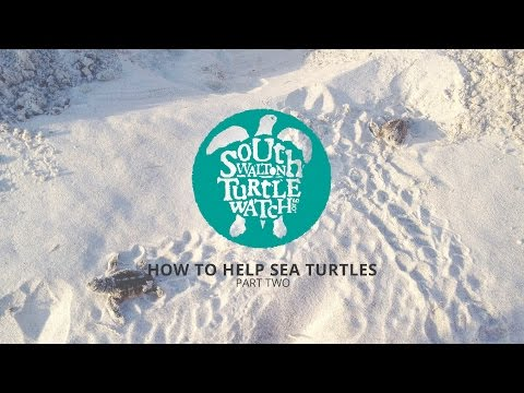 South Walton Turtle Watch :: How to Help Sea Turtles Part Two