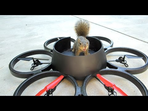 Squirrel Steals Drone