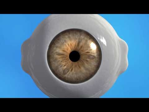 What Happens When The Eyes Are Dilated?