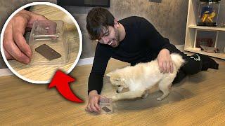 Testei a INTELIGÊNCIA do meu Cachorro **ele bugou**