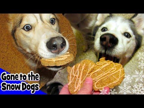 How to make Halloween Dog Treats   DIY Dog Treats   Snow Dogs Snacks 10