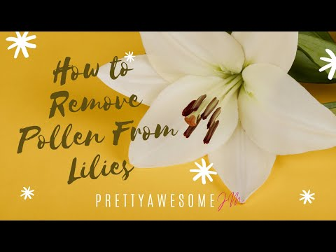 Remove Pollen from Lilies