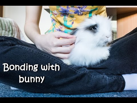 Bonding with bunny