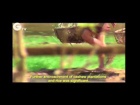 Rhinos Becoming Extinct