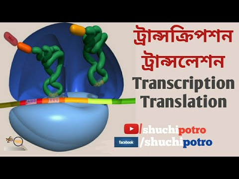 DNA Transcription and Translation(Bengali)|Biology-1|Chapter 1|Class11-12