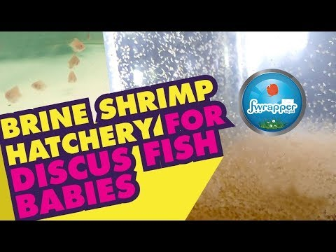 Brine Shrimp Hatchery || Fish Babies Food || Live Fish Food