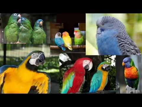 How To Build Bird Aviary