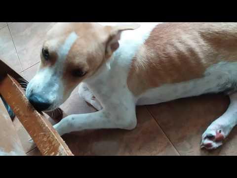Puppy Biting Chair