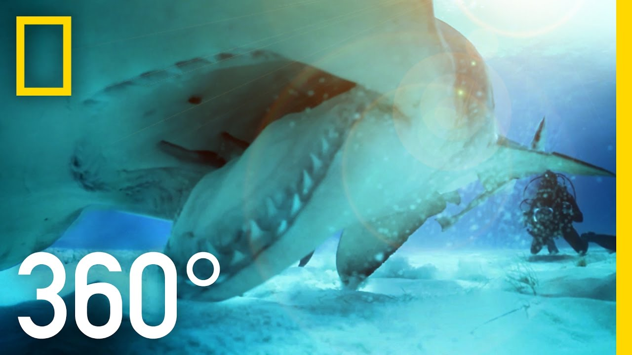 360° Great Hammerhead Shark Encounter | National Geographic