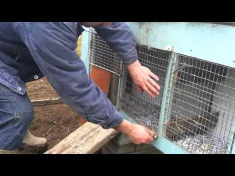 Trap Nest Poultry