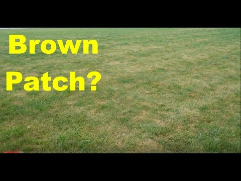 Wet Summer Cool Season Lawn Tips : Brown Patch