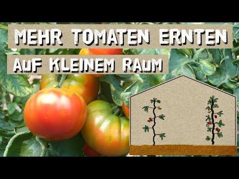 Wichtiger Tomatentipp - Mehr Ernte auf kleinem Raum