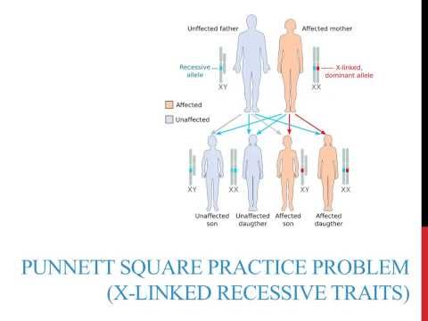 Punnett square practice problems (X-linked recessive)