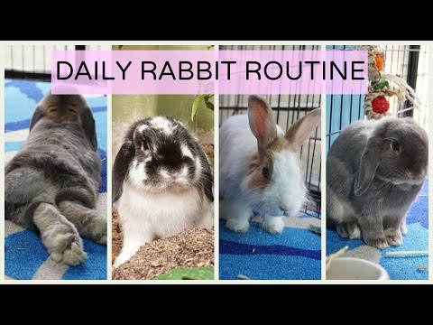 Daily Rabbit Routine/ With 3 Bonded Bunnies