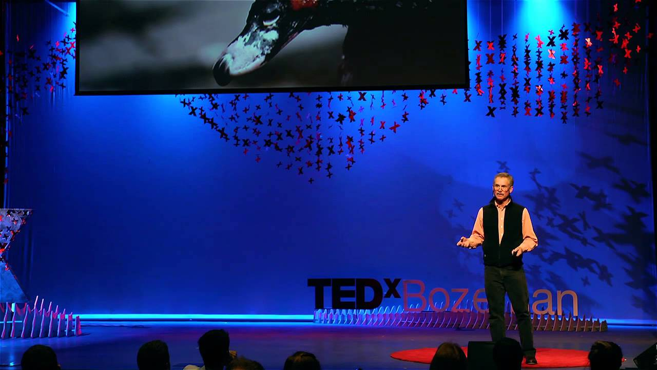 Every new pandemic starts as a mystery   David Quammen   TEDxBozeman